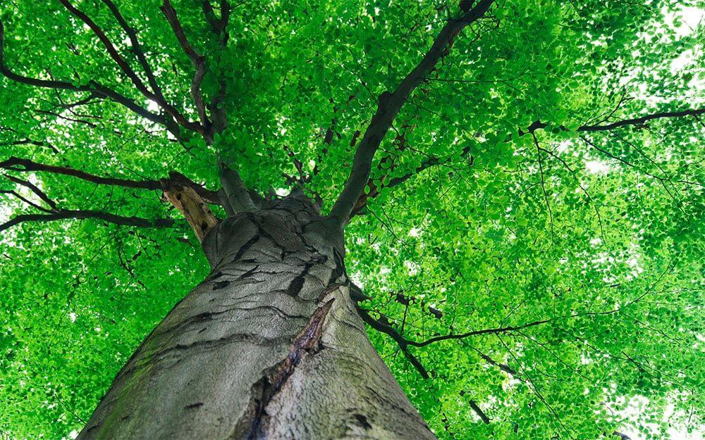 Baumpflege und Diagnose für Bäume in Privatgärten, Städten und Gemeinden kompetent und nachhaltig ausgeführt durch den Baumpflegespezialist FA.