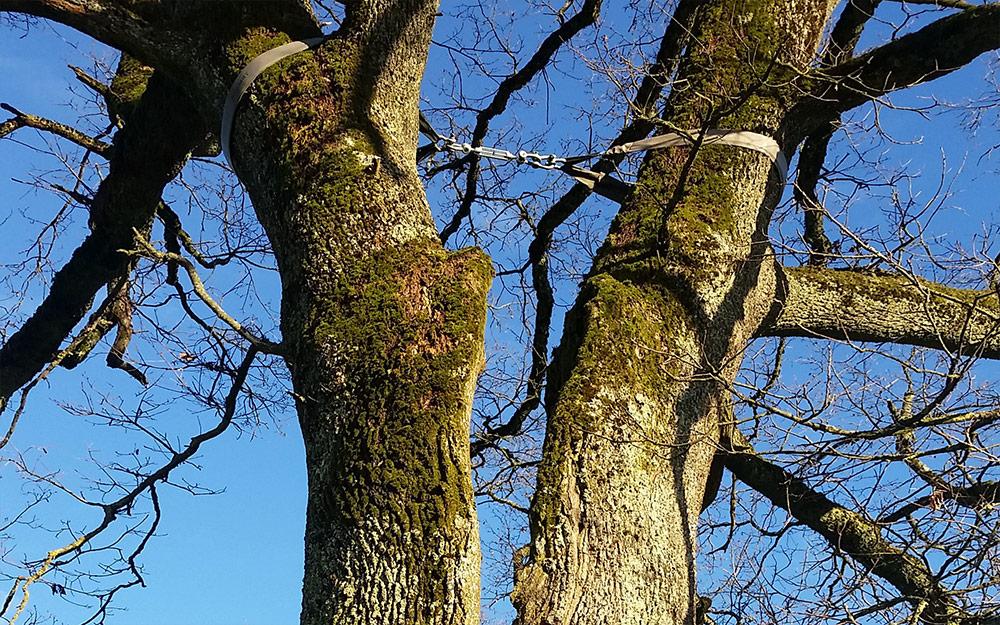 Baumsicherung