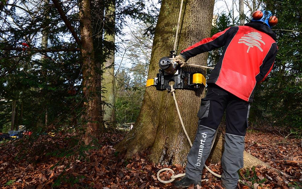 Baumpflegespezialist Baumart